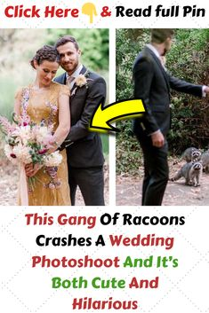 #ThisGangOfRacoonsCrashesAWeddingPhotoshoot #AndItsBothCuteAndHilarious Funny Pins, Funny Stuff, Cool Pins, Famous Celebrities, Wedding Photoshoot, Amazing Things, Laugh Out Loud, Fun Facts, Weird