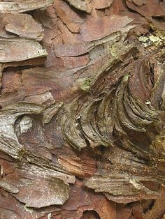 Bark: Wow, what kind of tree is this? Wood Texture, Texture Art, Natural Texture, Patterns In Nature, Textures Patterns, Arte Yin Yang, Foto Macro, Dame Nature, Peeling Paint