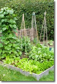 Vegetable Garden Layout Ideas vegetable garden design source small home vegetable garden design A Simple Small Space Garden Layout With Everything Youd Need To Pluck A Perfect Summer Salad Small Space Gardens Httpwwwpinterestcomwinein