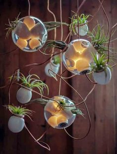Symbiosis of Illuminated and Planted Glass Pendants | Urban Gardens | Unlimited Thinking For Limited Spaces | Urban Gardens
