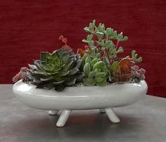 dish garden, by flora grubb