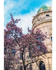 Huch wann ist denn das passiert? Der Frühling ist ja plötzlich da. Irgendwie hängt mein Kopf  und wohl auch mein Gefühl  noch im Winter fest... Habt ihr den Frühling vor der Tür schon bemerkt?    #mymirrorworld #citycenter #innenstadt #graz #grazerblogger #austrianblogger #365austria #hometown #grazverliebt #ihavethisthingwithgraz #austrianmoment #austria_memories #discoveraustria #hallofrühling #hellospring #1000thingstodoinaustria #visitgraz My Mirror, Louvre, World, Winter, Travel, Hello Spring, Instagram Images, Graz, Winter Time