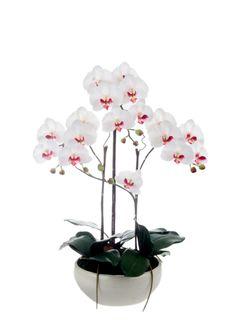A Loja do Gato Preto   Vaso Orquídea Branca #alojadogatopreto