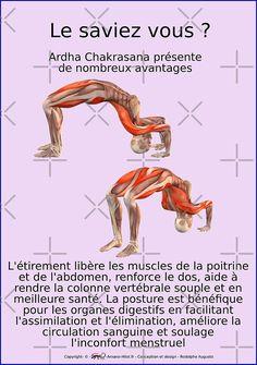 « Planches Musculo-squelettique des positions de Yoga - N°42 » par rodolphe Augusto   Redbubble