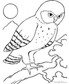 find this pin and more on niece homework projects owl colouring pages