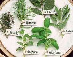 Plantas Aromáticas y sus Propiedades