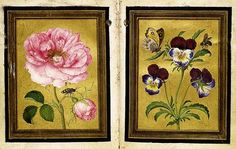 Jacques Le Moyne de Morgues Damask Rose and a Purple-and-Blue Wild Pansy (Heartsease), probably 1570s