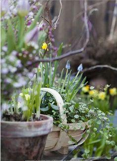 Gypsy Purple home. Beautiful Gardens, Beautiful Flowers, Cottage Garden Design, Purple Home, Bouquets, Welcome Spring, My Secret Garden, Plantation, Garden Gates