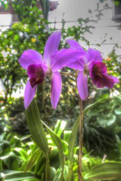 Atlanta Botanical Garden 0037 Atlanta Botanical Garden