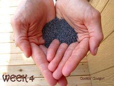 Cookin' Cowgirl: Pregnancy Foodie Project, food item each week w size of baby  Week 14 looks yummy!