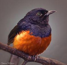 awesome Beautiful Bird
