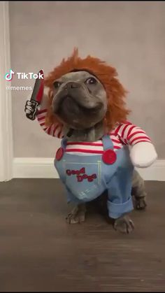 Animals Discover dog halloween costumes Im Gonna Getcha Funny Dog Memes Funny Animal Memes Cute Funny Animals Funny Animal Pictures Cute Baby Animals Funny Cute Funny Dog Videos Cute Animal Humor Cut Animals Funny Animal Jokes, Funny Dog Memes, Funny Dog Videos, Funny Animal Pictures, Cute Animal Humor, Humour Videos, Pet Memes, Cute Funny Dogs, Cute Funny Animals