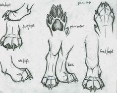 Resultado de imagem para fotos de patas de lobos