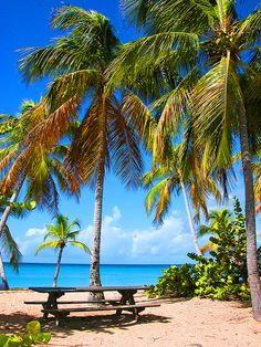 Beach at Sainte Anne, Martinique. Martinique is an overseas island region of France in the Lesser Antilles in the eastern Caribbean Sea. #Caribbean_Beach_Resort ~ http://VIPsAccess.com/luxury-hotels-caribbean.html