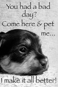 You had a bad day? Come here and pet me....I make it all better. Pets can make things so much better.