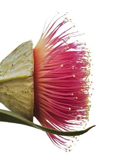 exotic flowers and plants Exotic Flowers, Wild Flowers, Beautiful Flowers, Simply Beautiful, Beautiful Gorgeous, Australian Native Flowers, Seed Pods, Arte Floral, Gras