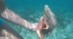 Conch Outdoor Adventures, Conch, Fish, Pisces, Shell