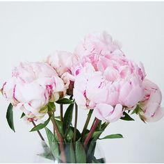 //pink peonies