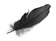 stock-photo-18011552-black-feather-on-white-background.jpg (190×138)