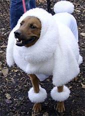Dogs costumes halloween