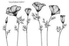 Image result for california poppy sketch