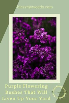 Get ready to grow at blessmyweeds.com. Check out simple resources for growing successful garden plants. Find your next plant with this guide to growing purple flowering bushes. Purple Flowering Bush, Flowering Bushes, Lilac Bushes, Big Flowers, Spring Flowers, Beautiful Flowers, Full Sun Landscaping, Wisteria Plant, Landscape Curbing
