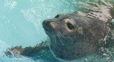 Fundy Discovery Aquarium, St. Andrews, New Brunswick, Canada