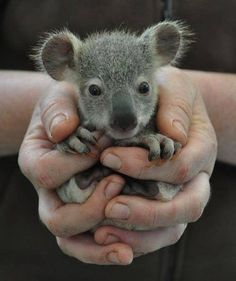 The 29 Cutest Koalas That Ever Roamed The Earth