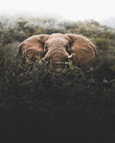 Namibia peek-a-boo with bull elephants Donal James Boyd