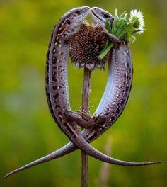 It looks like he's bringin her flowers! Awweeee! #LizardRomance. #ImALizard!