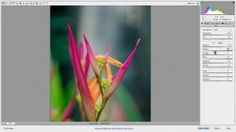 How To Use Camera Raw | Best Digital Cameras 2013