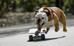skating doggie