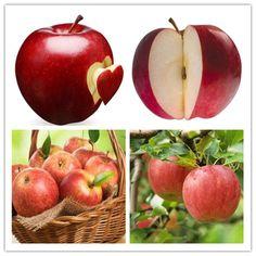 Red Apple 100 Pcs Apple Tree Seeds Exotic Seeds Fruit Bonsai Tree China Red  Fuji