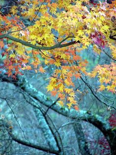 Some more colours, Kawaguchiko, Japan Copyright: Dinyar Ghyara