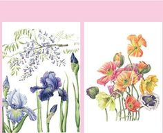 #ClippedOnIssuu from Janneke Brinkman-Salentijn - Bloemenkleurboek om te aquarelleren