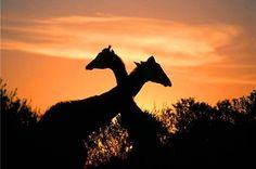 Photo Hein Von Hörsten © South African Tourism.