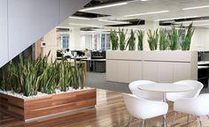 officeplants-gallery1