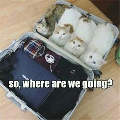 So, where are going?