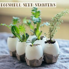 Afraid transplanting your seedlings will kill them before they root? With these Eggshell Seed Starters, you just plop it in the ground, eggshell and all!