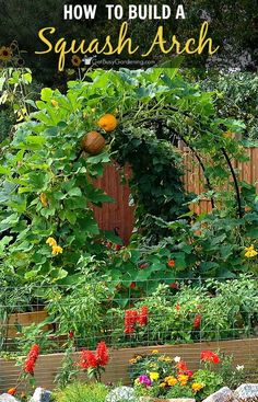 Build a squash arch to add beauty to your vegetable garden. This is an easy, inexpensive DIY project that doesn't take much time to make!