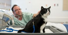 Duke, the rescued cat raises spirits among patients and staff at the SanFran medical center.