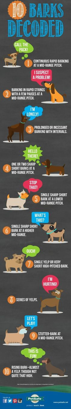Decode your dog's barking. 10 common barks explained in this infographic.