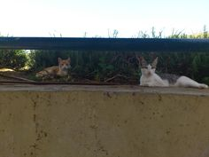 2 thinking cats