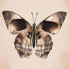 butterfly, imagination, secrets, skull