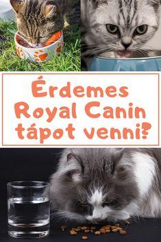 Cica | Macska | Kiscica | Kismacska | Cicák | Macskák | Kiscicák | Kismacskák | Nőstény | Kandúr | Royal Canin | Macskaeledel | Cicaeledel | Cica etetés | Macska etetés | Száraztáp | Szárazeledel | Száraz táp | Száraz eledel