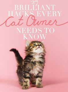 27 Brilliant Hacks Every Cat Owner Needs To Know http://www.buzzfeed.com/elainawahl/27-brilliant-hacks-every-cat-owner-needs-to-know?utm_term=Sink%20cat&utm_content=buffer82e02&utm_medium=social&utm_source=pinterest.com&utm_campaign=buffer#.rx6YJAakw9