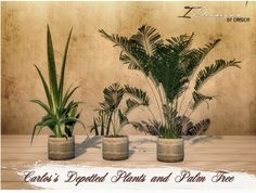 Sims 4 Designs: Carlos's Depotted plants and Palm Tree • Sims 4 Downloads