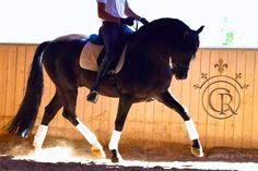 Christmas Gift Idea: Give someone you love a riding experience on top PRE Andalusian horses in Spain. This is our beautiful black PRE Andalusian stallion Alejandro. http://cavalreal.com/andalusian-horses-in-barcelona/