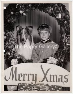 Christmas promo photo for TV show Lassie with Jon Provost and Lassie - Sitcoms Online Photo Galleries Classic Comedy Movies, Classic Comedies, Rough Collie, Collie Dog, Dog Tv Shows, Jon Provost, Vintage Christmas Photos, Famous Dogs, Christmas Shows