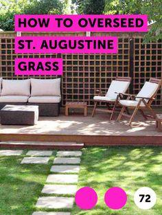 7 Best St Augustine grass images in 2018 | St augustine